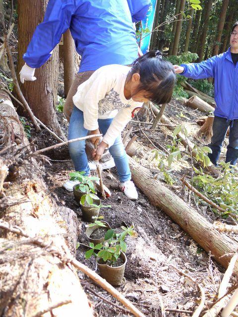 最後は子供達と一緒にコナラの苗を植樹