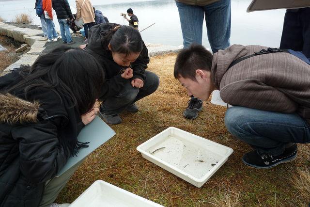 佐鳴湖で獲れた魚に興味津々