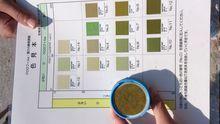 抽出したクロロフィルと色見本を比較し、濃度確認