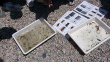 水生生物調査、約10種類の生物がとれました!