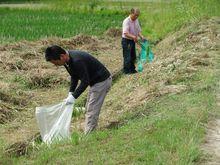 地域住民の方と一緒に田んぼの土手のゴミ拾い