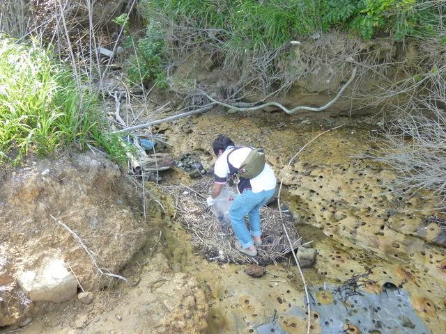 潮の満ち引きで溜まったゴミを回収