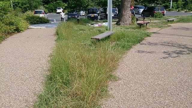 ベンチの周りにも草が…
