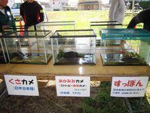 佐鳴湖に住む生物たちの紹介