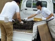 集められた海草はトラックで運びます