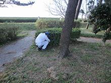 植木の根元にゴミ発見!