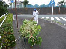 【本社】歩道に伸びていた樹木を伐採しました