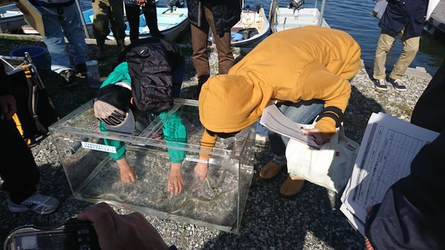 佐鳴湖の天然ウナギを触らせてもらいました!