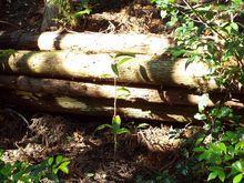 豊かな森への第一歩です