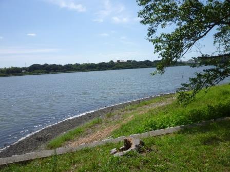 佐鳴湖の水面。改めて良い景色だと思いました。