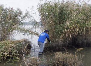 環境安全企画部/「第15回佐鳴湖ヨシ刈り」
